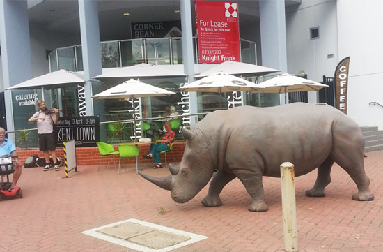 rhino-cafe-crop-500