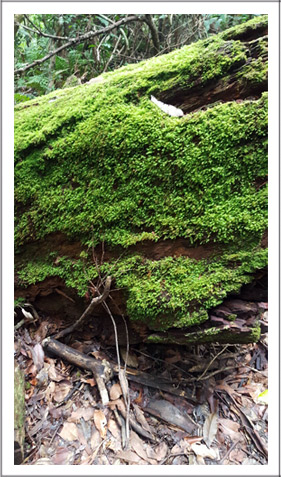 Mountain-moss-for-web