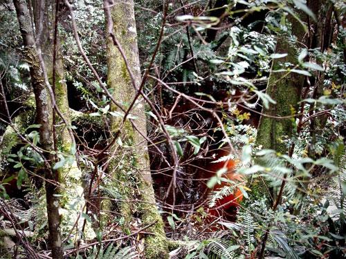 thiick-vegetation-for-web