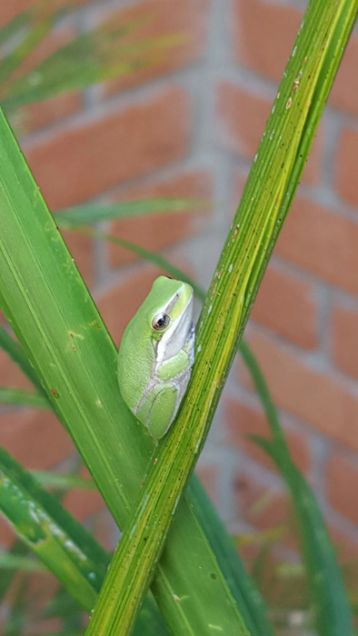 green-frog-billabong-for-web