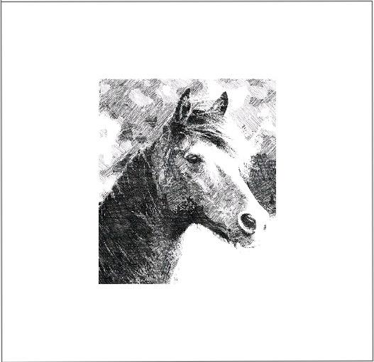 brumby-version-2fir-web