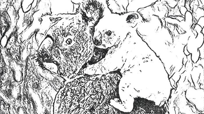 koala-and-joey-sketch-pencil-for-web
