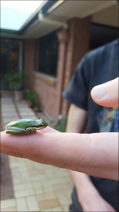 green-frog-on-hand-for-web