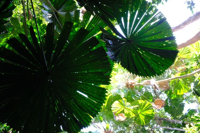 shadowed rainforest