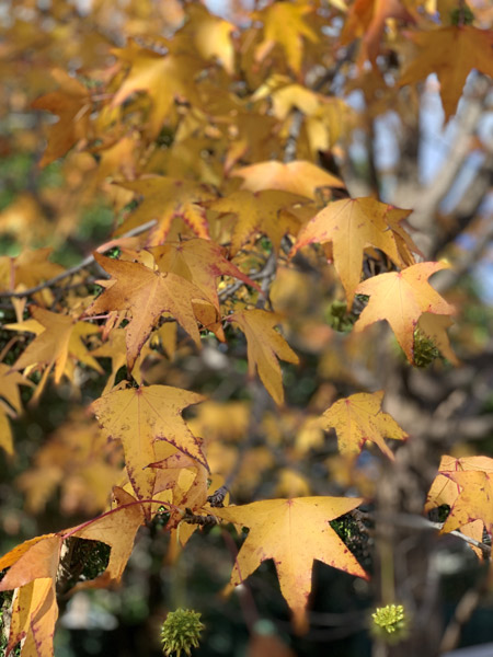 autumn-sadness-for-web