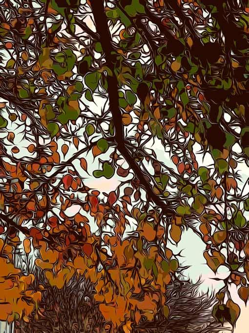 autumn-sunshine-for-web