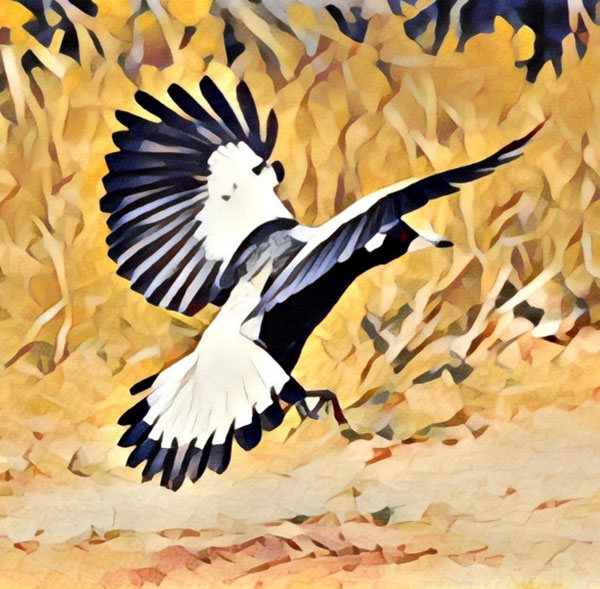 magpie-2-(2)for-web